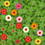 Flowers Zinnias patterns. Vector set of four colorful seamless patterns with zinnias flowers and leaves texture  green, pink, yellow, red, orange Stock Image