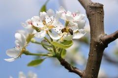 flowers2 δέντρο Στοκ Φωτογραφίες