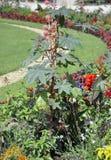 Flowersbeds from Jardin du Luxembourg from Paris in France. Flowerbeds from Jardin du Luxembourg from Paris in France on july 18th 2015 stock photo