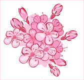 Flowerses aan kersen Stock Illustratie