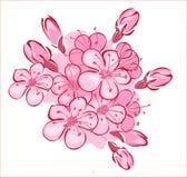 Flowerses alle ciliege illustrazione di stock