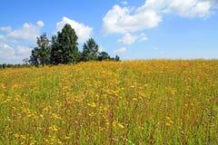 Flowerses amarillos fotografía de archivo libre de regalías