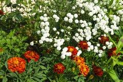 Flowerses blancos en el fondo de la hierba verde Fotos de archivo libres de regalías