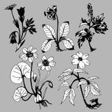 Flowerses de zone illustration libre de droits