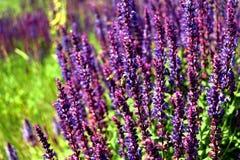 Flowerses del campo Fotografia Stock