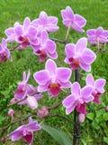 Flowerses a las orquídeas en fondo verde Foto de archivo