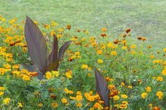 Flowerses luminosi su fondo dell'erba verde Fotografia Stock