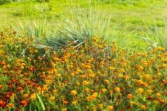 Flowerses luminosi su fondo dell'erba verde Immagini Stock