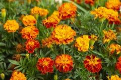 Flowerses luminosi su fondo dell'erba verde Immagine Stock Libera da Diritti