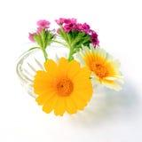 Flowerses no vaso imagem de stock royalty free