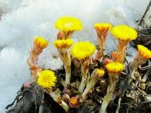 Flowerses rullar ihop foten Fotografering för Bildbyråer