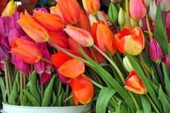 Flowershop tulips Stock Images
