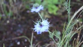 Flowersit. The flowers video was filmid in bulgaria jambol stock footage