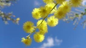 flowersky stockfotografie
