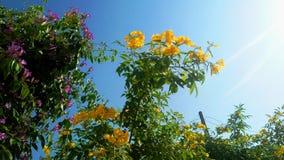Flowersl amarillo y violeta imágenes de archivo libres de regalías
