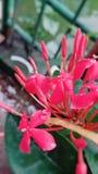 Flowerslove lizenzfreies stockfoto