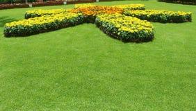 Flowerson do jardim o prado Fotos de Stock Royalty Free