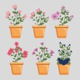 Flowersplants determinados con las hojas y los pétalos dentro del pote de la planta ilustración del vector