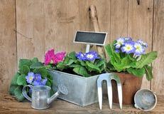 Flowerspot y accesorios que cultivan un huerto Fotografía de archivo