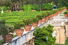 Flowerspots avec l'orange décorative en villa Doria Pamphili chez par l'intermédiaire d'Aurelia Antica Images stock