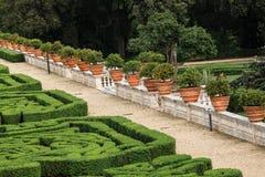 Flowerspots med den dekorativa apelsinen i villan Doria Pamphili på via Aurelia Antica Royaltyfri Fotografi