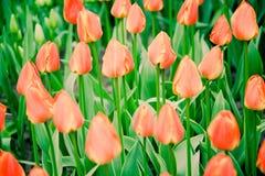 Flowerss στη μέση της άνοιξη στοκ εικόνα