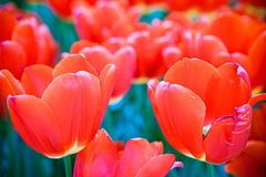 Flowerss στη μέση της άνοιξη στοκ φωτογραφία με δικαίωμα ελεύθερης χρήσης