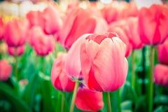 Flowerss στη μέση της άνοιξη Στοκ εικόνα με δικαίωμα ελεύθερης χρήσης