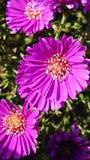 Flowertime Стоковое Изображение RF