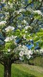 Flowertree royalty-vrije stock afbeeldingen