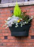 Flowerwause Royaltyfri Fotografi
