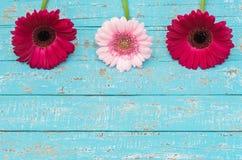 Flowery διακόσμηση συνόρων με τα ρόδινα λουλούδια ως ευχετήρια κάρτα Στοκ Φωτογραφία