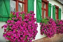 Flowery παραθυρόφυλλα στοκ εικόνες