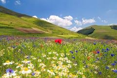 Flowery πεδιάδα Στοκ Εικόνες