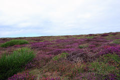 flowery χορτοτάπητας Στοκ εικόνες με δικαίωμα ελεύθερης χρήσης