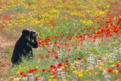 Flowery. Picture of field full of flowers, Israel Stock Images