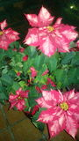 flowery Στοκ Εικόνες