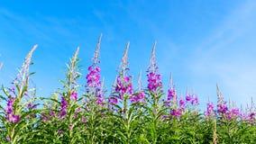 Πράσινος flowery φράκτης Στοκ Φωτογραφίες