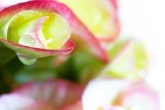 Flowery background Stock Photos