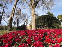 Flowery Corner Ciutadella Park. Stock Images