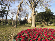 Flowery Corner Ciutadella Park. Stock Photos