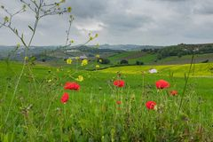Flowery Countryside. Beautiful and flowery countryside with a house in a distance on a cloudy Spring day royalty free stock photos