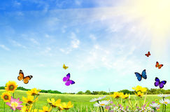 Flowery field stock photo