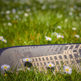 Flowery field of daisies. Stock Photos