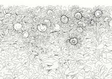 Flowery field with sunflowers. Botanical, floral, botany royalty free illustration