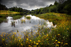 Flowery Lake. Landscape of flowery lake and cloudy sky in Alentejo, Portugal royalty free stock photo