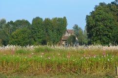 Flowery landscape Stock Photos