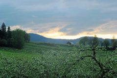 Flowery landscape Stock Photography