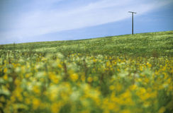 Flowery meadow. Landscape with meadow full of flowers in the German Allgaeu, in the background a telegraph pole royalty free stock image