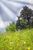 Flowery meadow Stock Photography